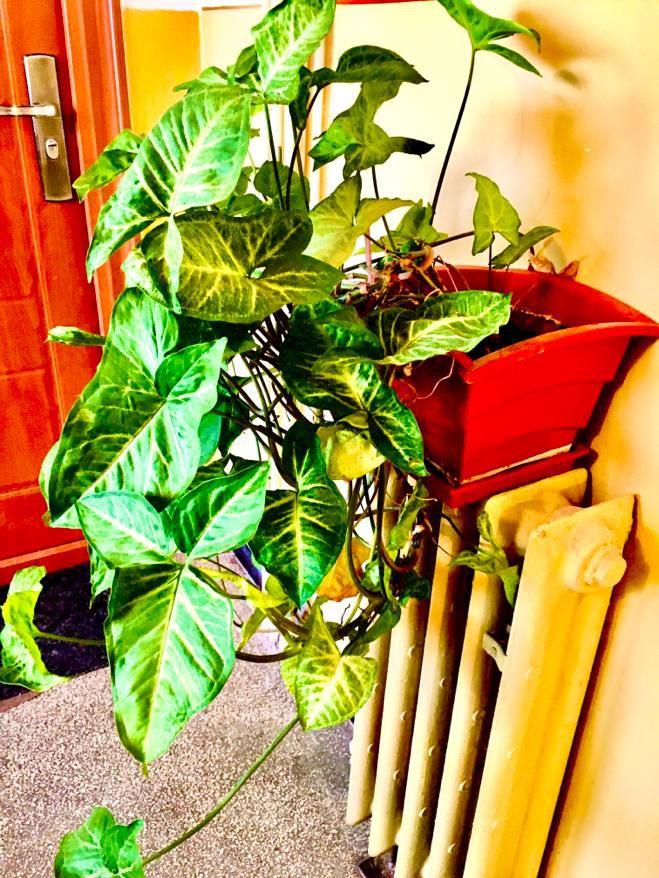 Vanzare Apartament 4 camere - DACIA, Constanta